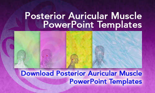 Posterior Auricular Muscle Medicine PowerPoint Templates