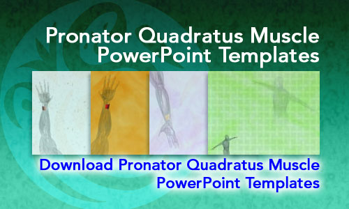 Pronator Quadratus Muscle Medicine PowerPoint Templates