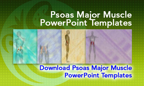 Psoas Major Muscle Medicine PowerPoint Templates