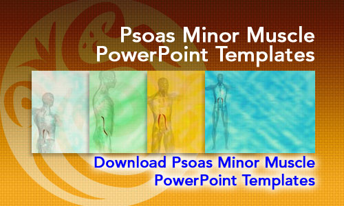 Psoas Minor Muscle Medicine PowerPoint Templates