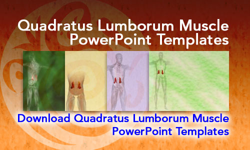 Quadratus Lumborum Muscle Medicine PowerPoint Templates