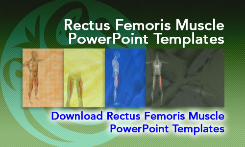 Rectus Femoris Muscle Medicine PowerPoint Templates