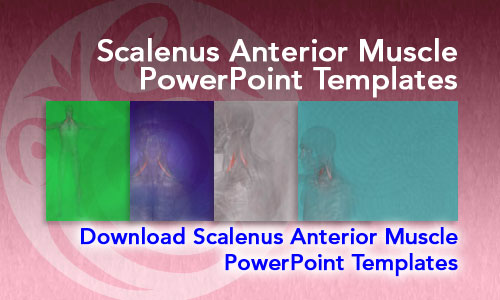 Scalenus Anterior Muscle Medicine PowerPoint Templates
