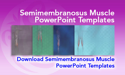 Semimembranosus Muscle Medicine PowerPoint Templates