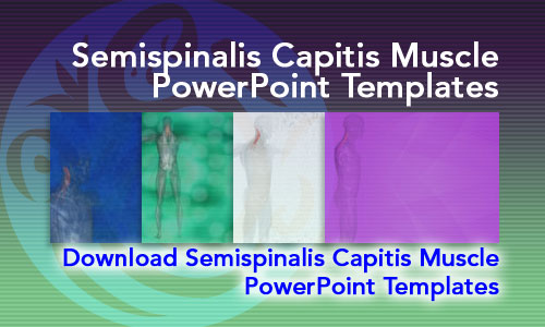 Semispinalis Capitis Muscle Medicine PowerPoint Templates