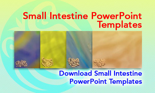 Small Intestine Medicine PowerPoint Templates