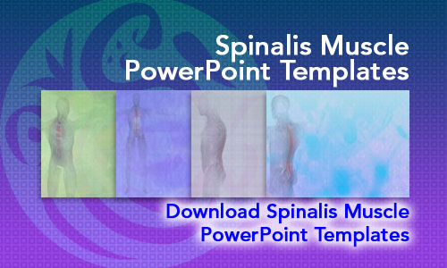 Spinalis Muscle Medicine PowerPoint Templates