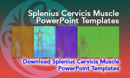 Splenius Cervicis Muscle Medicine PowerPoint Templates