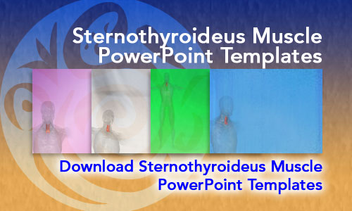 Sternothyroideus Muscle Medicine PowerPoint Templates