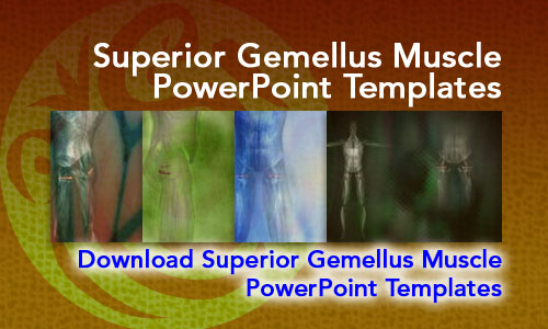 Superior Gemellus Muscle Medicine PowerPoint Templates