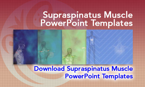 Supraspinatus Muscle Medicine PowerPoint Templates