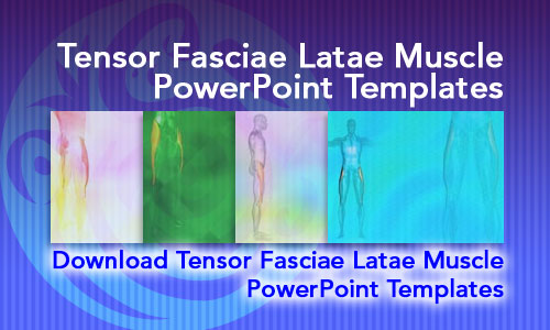 Tensor Fasciae Latae Muscle Medicine PowerPoint Templates