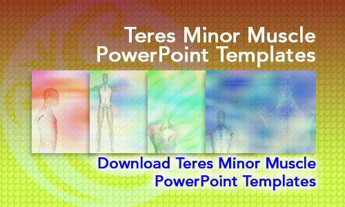 Teres Minor Muscle Medicine PowerPoint Templates