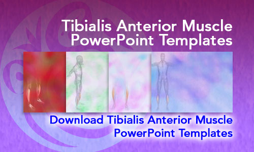 Tibialis Anterior Muscle Medicine PowerPoint Templates