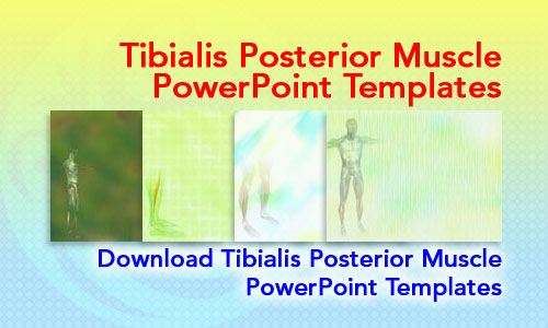 Tibialis Posterior Muscle Medicine PowerPoint Templates
