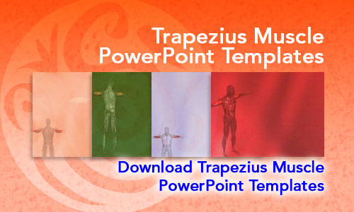 Tricep Muscle Medicine PowerPoint Templates