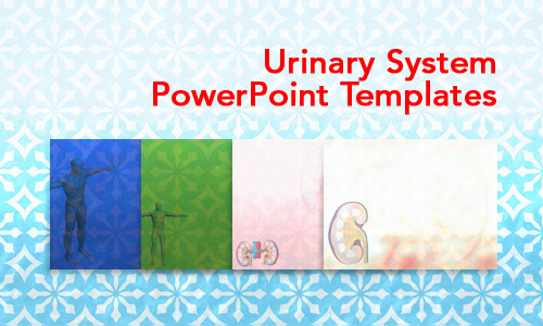 urinary system medicine powerpoint templates
