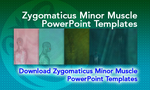 Zygomaticus Minor Muscle Medicine PowerPoint Templates