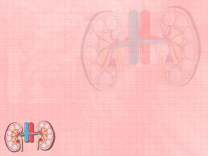Kidney PowerPoint Templates
