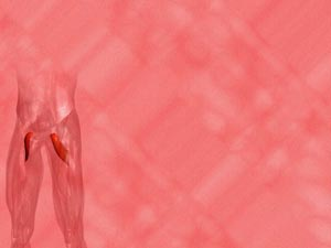Pectineus Muscle Medicine PowerPoint Templates